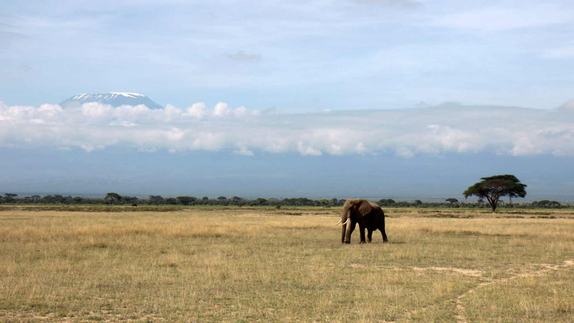 Reisebericht-Amboseli-Park in KeniaBeitragsbild