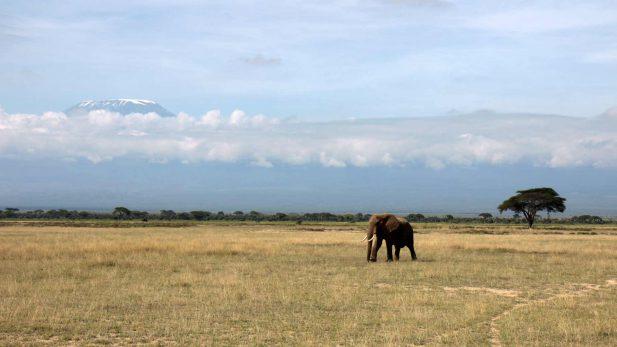 Reiseblog-Amboseli-Beitragsbild